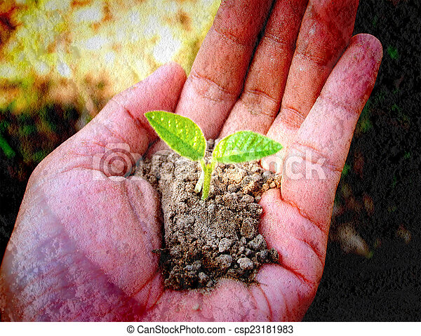 pequeno, árvore, segurando, mão - csp23181983