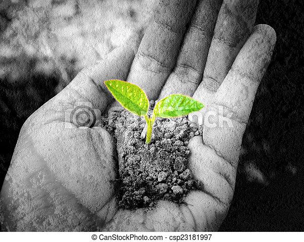 pequeno, árvore, segurando, mão - csp23181997