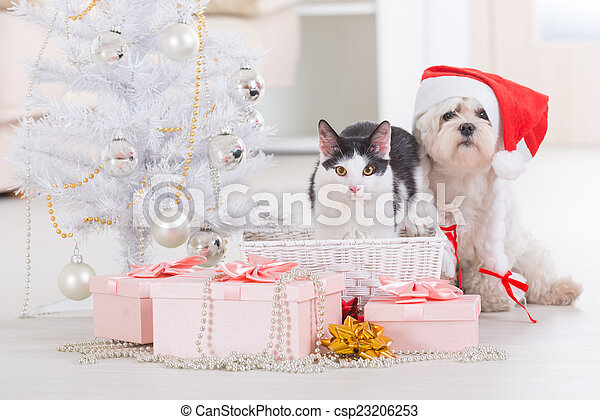 Cat and little dog wearing Santa Claus hat