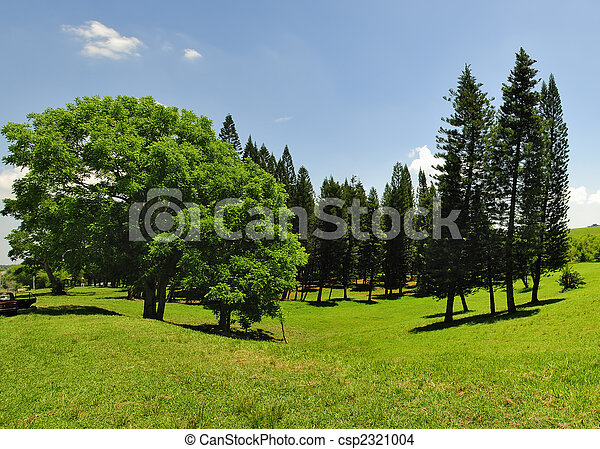 Green trees panorama - csp2321004
