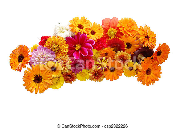 Flowers with petals of various colours on a white background - csp2322226