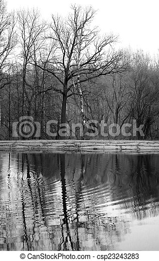 tree near the pond - csp23243283