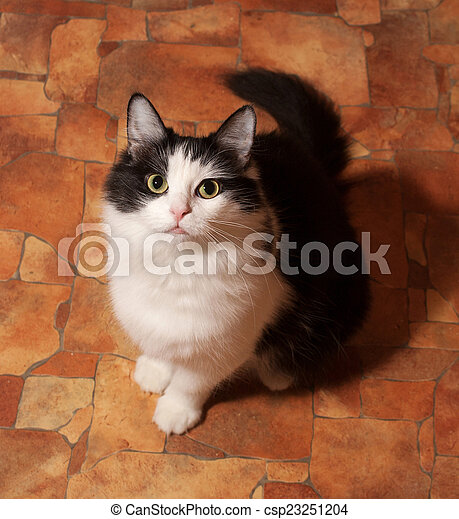 Black and white fluffy cat sits on floor
