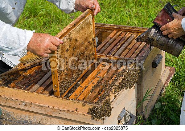 Beehive 1 - csp2325875
