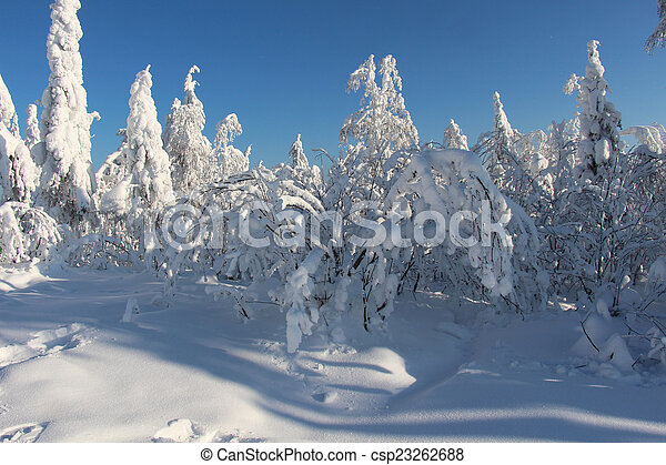 Trees covered with snow in Sunny weather