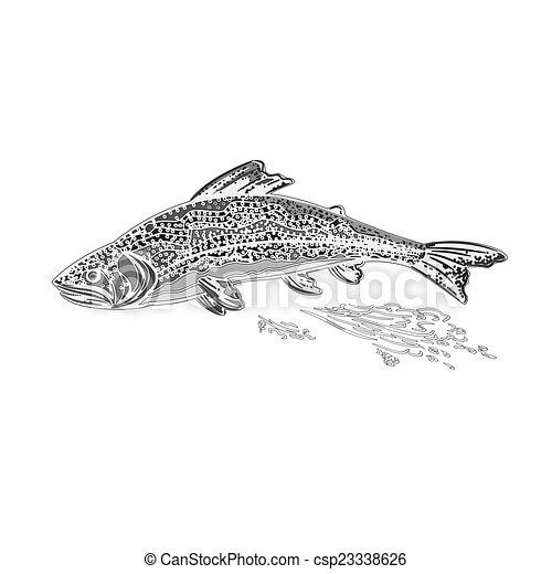 Rainbow trout salmonidae as vintage - csp23338626