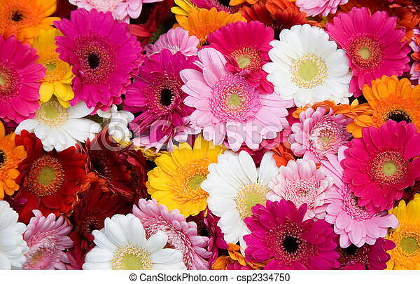 stock fotografie von viele blumen closeup gerbera bunte closeup von csp2334750. Black Bedroom Furniture Sets. Home Design Ideas