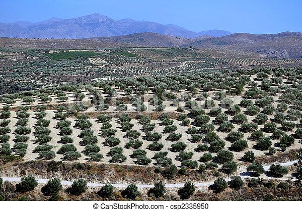 Agriculture in Crete, Greece. - csp2335950