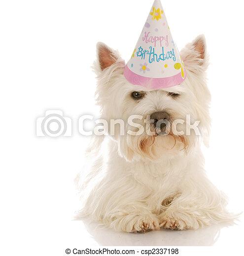 穿, 2UTE, 西方, 生日, 白色, 高地, 地籍冊, 帽子 - csp2337198