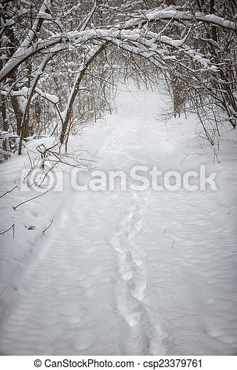 Snowy winter path in forest - csp23379761