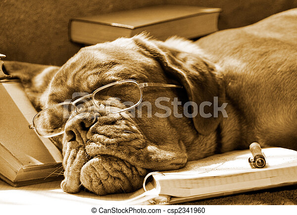Tired Dog Sleeping at her Lessons - csp2341960