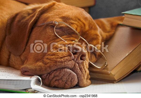 bildung, hund - csp2341968