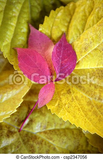 Leaves still of autumn leaves, dark wood background, fall classic images - csp2347056