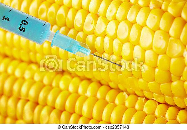 syringe threaded in corn crop - csp2357143