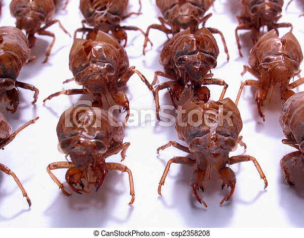 Insect Army: Military Cicada shells - csp2358208