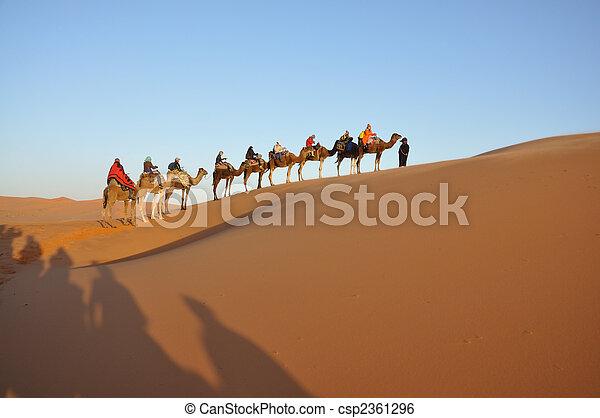Camel trip in Sahara desert Merzouga, Morocco, north Africa - csp2361296