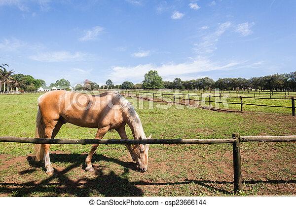 Horse Animal Landscape