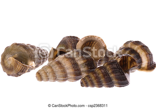 Live Whelks - csp2368311
