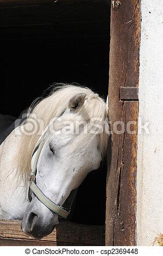 sleeping horse - csp2369448