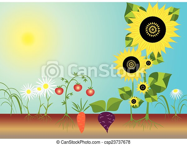 Graphics For Kitchen Garden Graphics wwwgraphicsbuzzcom