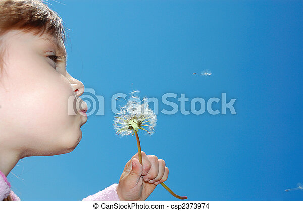 dandelion wishing blowing seeds - csp2373974