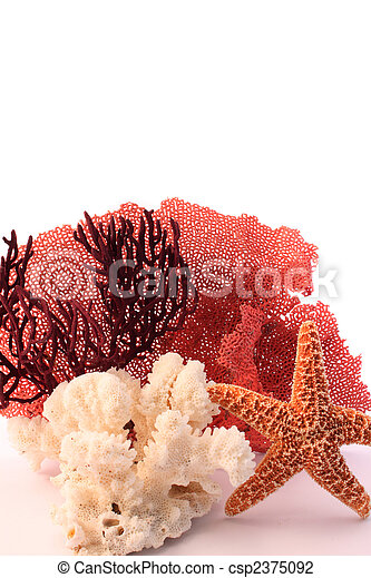 coral and starfish - csp2375092