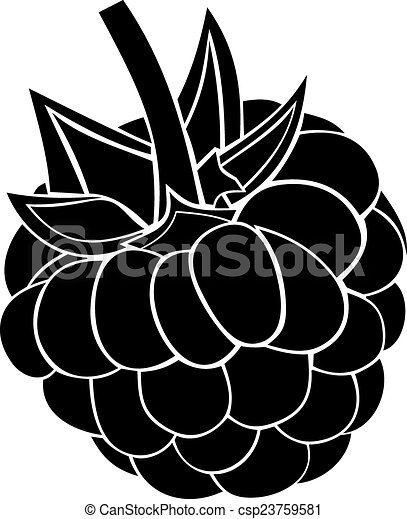 Vector of Raspberry berry. Raspberry berry on a white ...