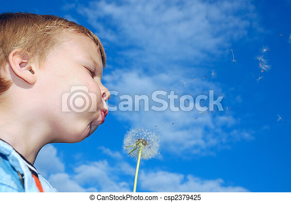 dandelion wishing - csp2379425