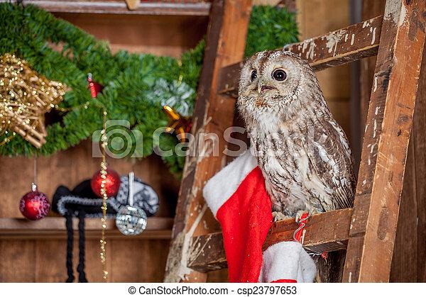Tawny or Brown Owl, Strix aluco