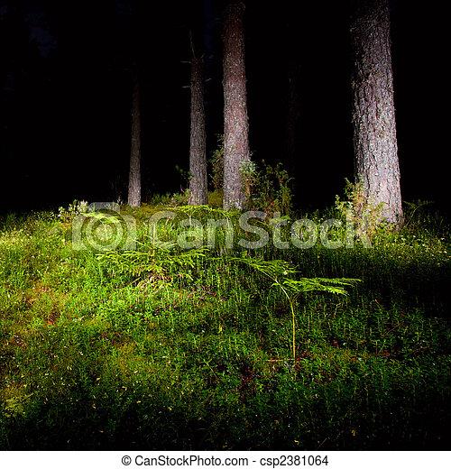 Night forest - csp2381064