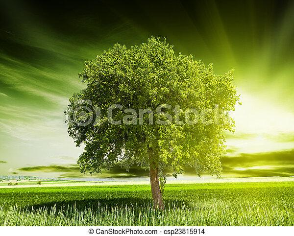 綠色, 樹, 自然 - csp23815914