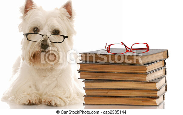 dog obedience - west highland white terrier laying down beside stack of books - csp2385144