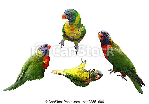 kollázs, madarak, lóripapagáj - csp23851606