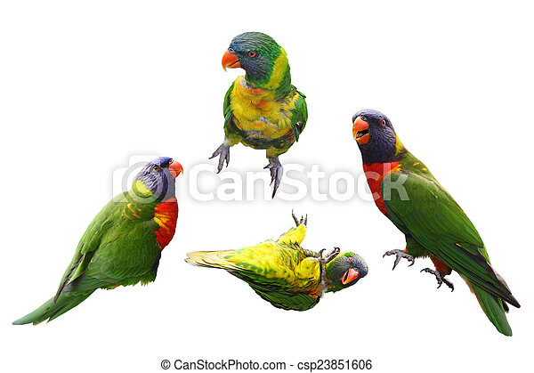 Lorikeet Birds Collage - csp23851606