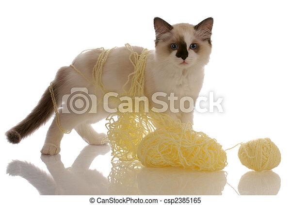 purebred ragdoll kitten playing with yellow yarn - csp2385165