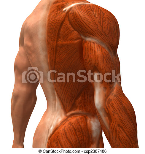 Anatomy - csp2387486