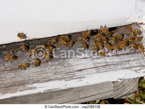 Honey Bee Beehive - csp2388108