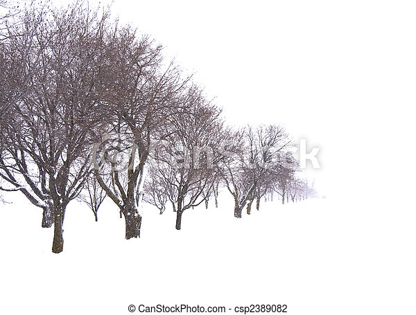Trees in snow field - csp2389082