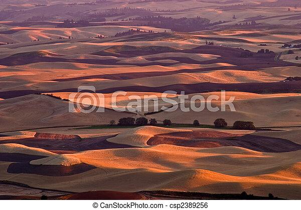 Rolling fields - csp2389256