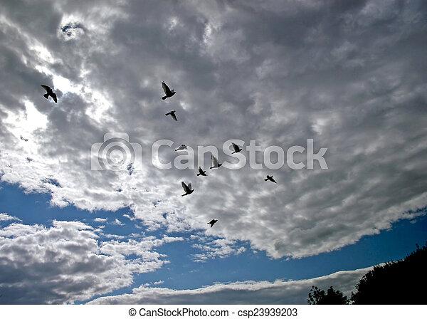 repülés, madarak - csp23939203