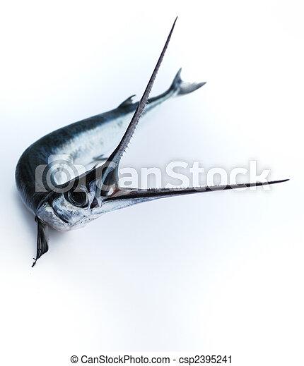 Stock de fotograf a de pez sierra cabeza dientes fish for Sierra fish in english