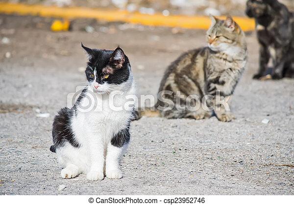three wild cats