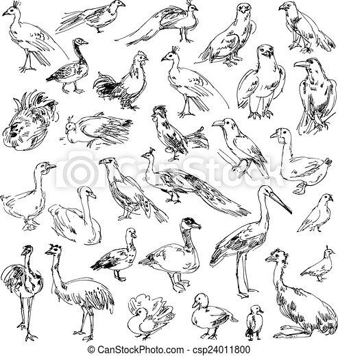 Wild birds - csp24011800