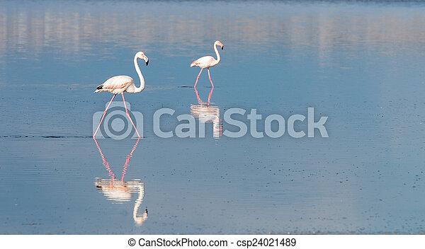 flamingó, madarak - csp24021489