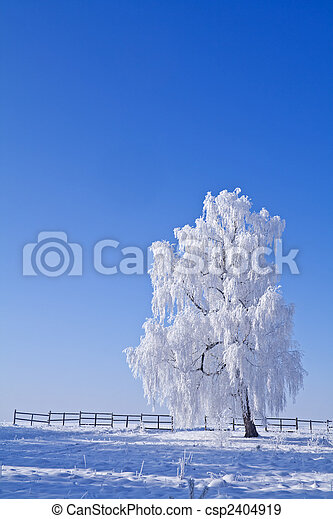 Lonely white frost covered tree against blue sky - csp2404919