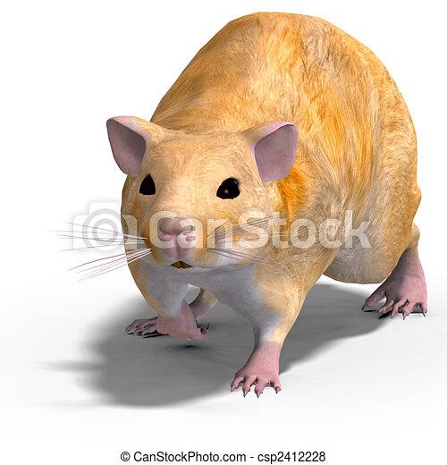 cute hamster - csp2412228