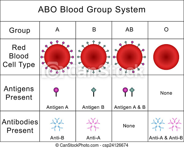 Illustrations de Abo, groupe, système, sanguine ...