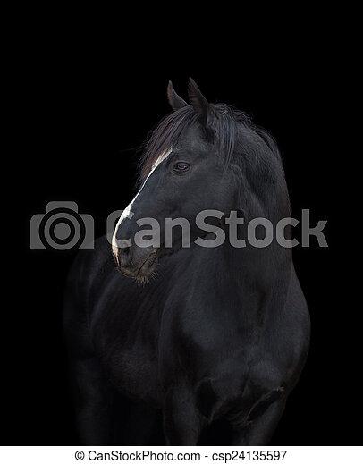 Black horse head on black