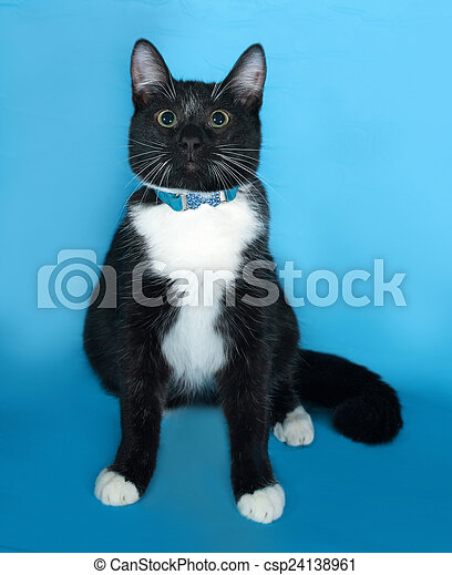 Black and white Cat in blue collar sitting on blue