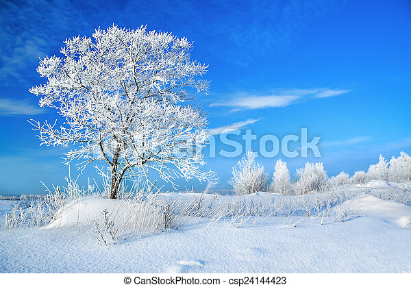 beautiful rural winter landscape with a one tree and the blue sky